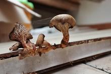 Funghi Del Sottotetto