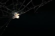 Close-up Of Spider On Web Agai...