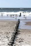 Fototapeta Fototapety z morzem do Twojej sypialni - Falochron i mewy nad Morzem Bałtyckim