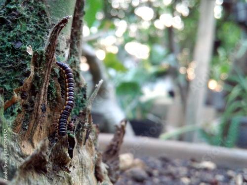 Close-up Of Millipede On Tree Trunk Tapéta, Fotótapéta
