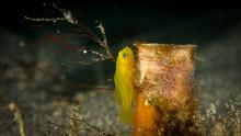 Peces, Corales Y Amebas Submar...