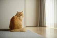 日向ぼっこする猫(マ...