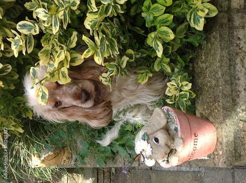 Fototapety, obrazy: Portrait Of Dog By Potted Plants