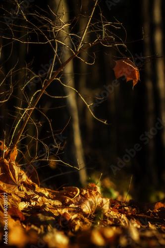 Obraz na plátně Jesienna nostalgia
