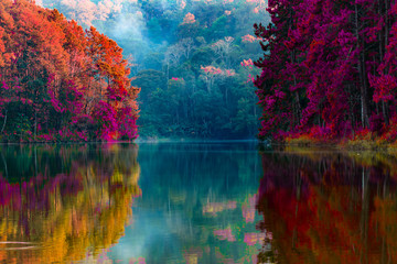 Fototapeta Natura Beauty of the scenery of the trees reflecting the surface of the water in the autumn colors by the lake in Pang Ung Thailand