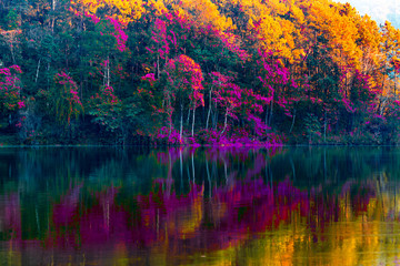 Panel Szklany Podświetlane Do łazienki Beauty of the scenery of the trees reflecting the surface of the water in the autumn colors by the lake in Pang Ung Thailand