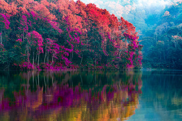 Obraz na Szkle Las Beauty of the scenery of the trees reflecting the surface of the water in the autumn colors by the lake in Pang Ung Thailand