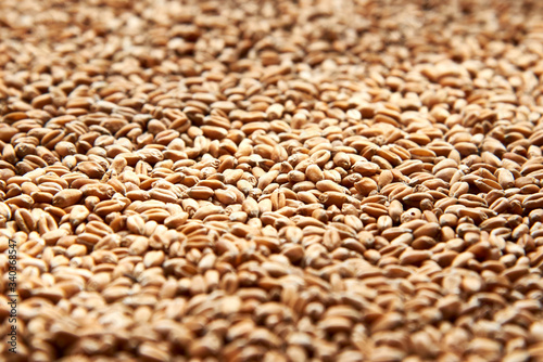 Grains of ripened beautiful wheat, harvesting in autumn. Fototapet