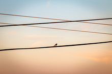 Dark Eyed Junco Bird Silhouett...