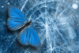 beautiful blue tropical butterflie. moths for design