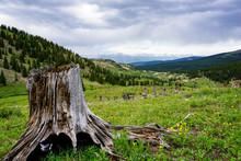 Old Tree Stump Mountain Valley