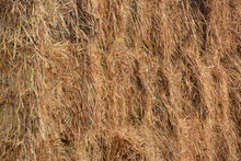 Full Frame Shot Of Dried Grass...