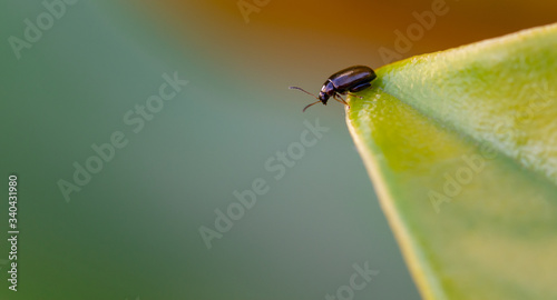 Photo Small black beetle on the edge of a leaf peering into the green abyss