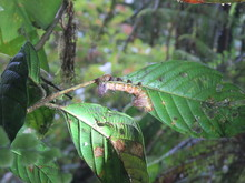 Close-up Of Caterpillar On Plant