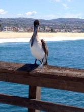 Pelican Perching On Pier Over Sea