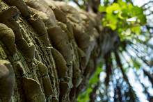Palm Tree Trunk Texture Close Up