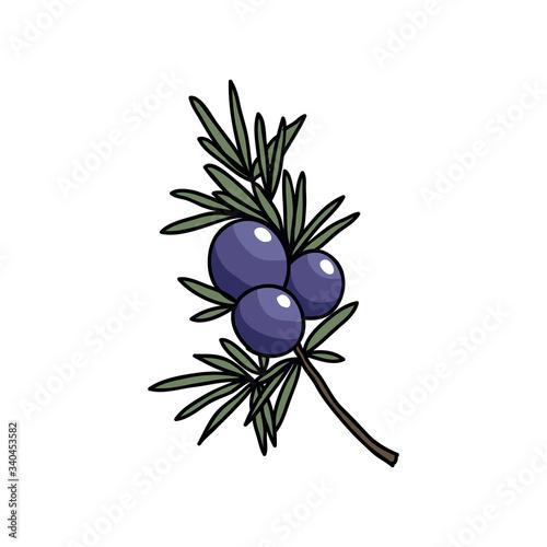 Fototapeta juniper doodle icon obraz