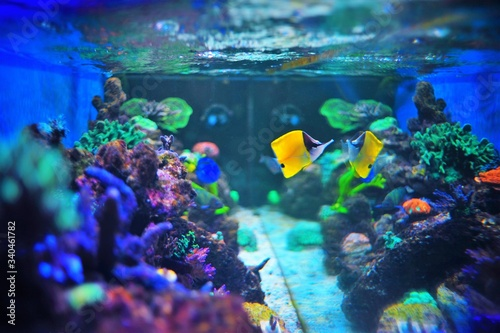 Canvas Print Fish Swimming In Tank