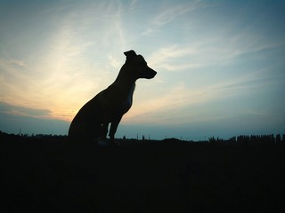 Obraz na płótnie Canvas Low Angle View Of Dog On Field Against Sky At Sunset