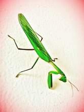 Close-up Of Grasshopper On Wall