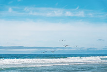 Seascape And Flock Of Flying B...