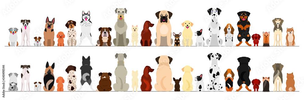 Fototapeta dogs big border set
