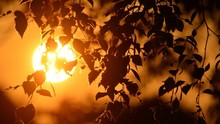 Close-up Of Silhouette Leaves Against Bright Sun