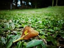 Close-up Of Autumn Leaf On Grass