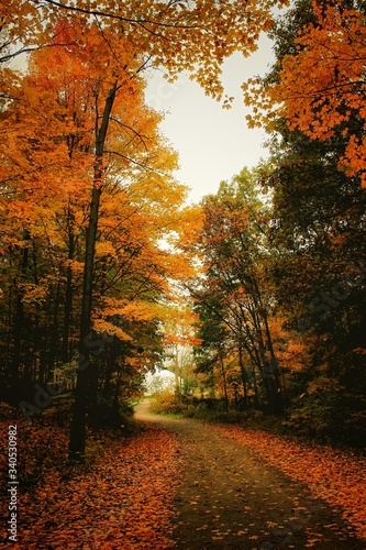 Fototapety, obrazy: Trees In Forest During Autumn