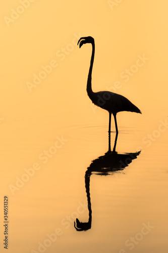 Valokuva Silhouette Flamingo Perching On Lake During Sunset
