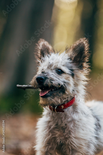 Cute little adopted mix-breed puppy having fun in the forest. Wallpaper Mural