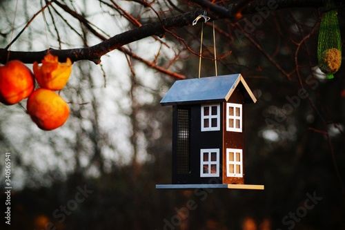 Fotografie, Obraz Low Angle View Of Birdhouse Hanging From Branch