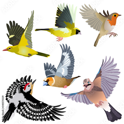 Common European birds as woodpecker, jay, hawfinch, serin, golden oriole and rob Canvas Print