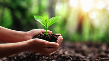 Hand Holding Small Tree For Planting In Forest. Concept Green World