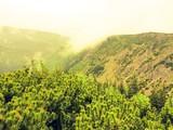 Fototapeta Na ścianę - Close-up Of Fresh Green Landscape Against Sky During Sunset