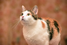 Beautiful Tricolored Cat Portr...