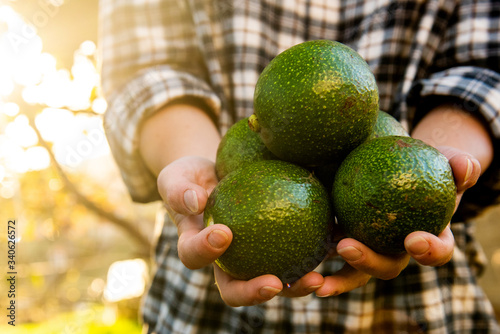 Fotografia hands holding avocado in hands with sunny background