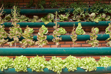 Growing Vegetables In Tray At Home, DIY Concept.