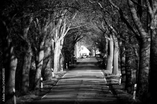Archway Amidst Trees Fototapet