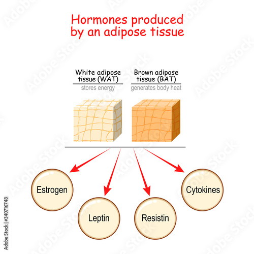 Canvas Print Hormones produced by adipose tissue