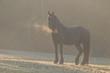 Pferd bei Sonnenaufgang