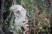 Red Color Painted Animal Scull On Wooden Triangle Outdoor. Black Magic Voodoo Ritual