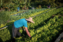 Proud Organic Farmer Man From ...