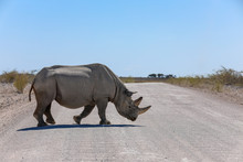 Lone Black Rhino Crossing A Dusty Dirt Road In Namibia