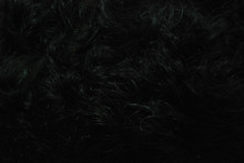 Detailed Photography Of Curly Black Hair