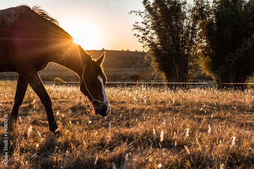 Photo horse in the field