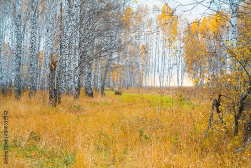 Trees on the autumn fields. Autumn landscape. © maxandrew