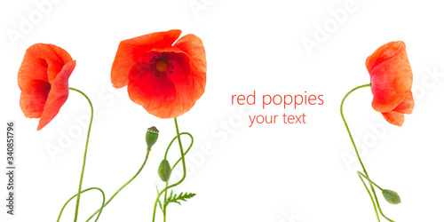 Photo red poppies