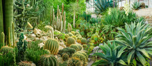 Panorama Of Various Cacti And ...
