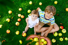 Two Children Picking Apples On A Farm In Early Autumn. Little Baby Girl And Boy Playing In Apple Tree Orchard. Kids Pick Fruit In A Basket.